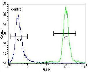 Flow Cytometry - Anti-ZNF28 antibody - Aminoterminal end (ab170365)