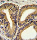 Immunohistochemistry (Formalin/PFA-fixed paraffin-embedded sections) - Anti-TRIM65 antibody (ab170424)