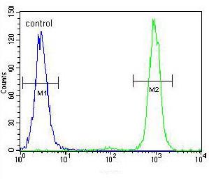 Flow Cytometry - Anti-SSH3 antibody - C-terminal (ab170440)