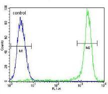 Flow Cytometry - Anti-KSR2 antibody (ab170442)