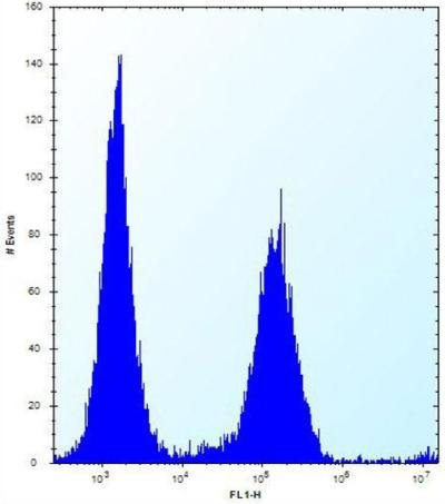 Flow Cytometry - Anti-KRTAP25-1 antibody - C-terminal (ab170713)