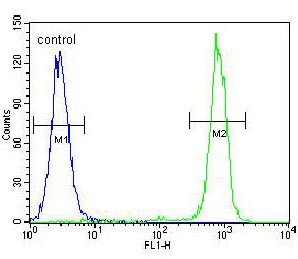 Flow Cytometry - Anti-Carboxypeptidase B antibody - N-terminal (ab170724)