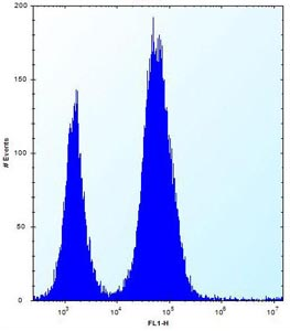 Flow Cytometry - Anti-DULLARD antibody (ab170765)