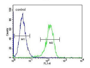 Flow Cytometry - Anti-Tau tubulin kinase 2 antibody - N-terminal (ab170799)