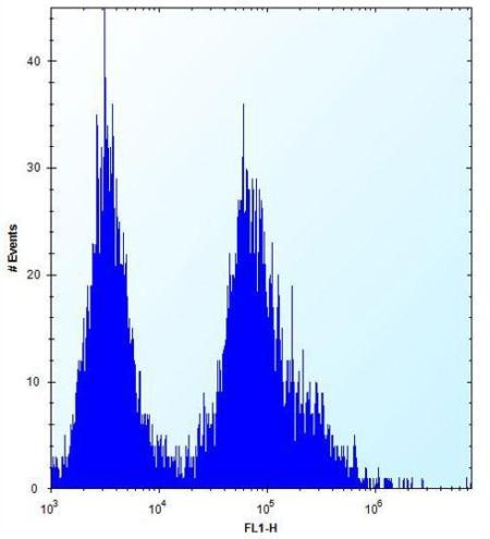 Flow Cytometry - Anti-p15 INK4b antibody (ab170851)