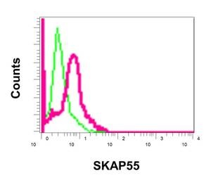 Flow Cytometry - Anti-SKAP55 [EPR11360] antibody (ab170882)