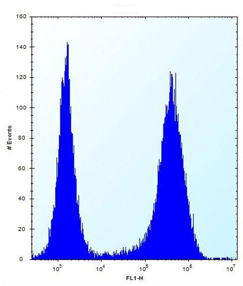 Flow Cytometry - Anti-SPOPL antibody (ab171126)