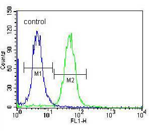 Flow Cytometry - Anti-CACNG4 antibody (ab171143)