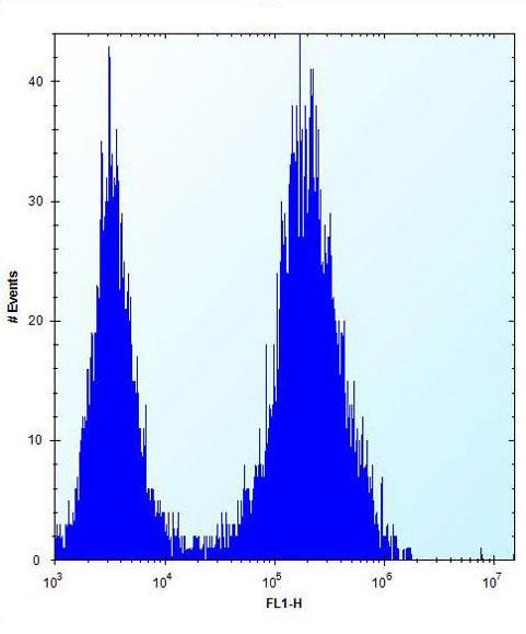 Flow Cytometry - Anti-Borealin/CDCA8 antibody - N-terminal (ab171148)