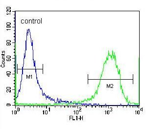 Flow Cytometry - Anti-ZSCAN2 antibody - N-terminal (ab171408)