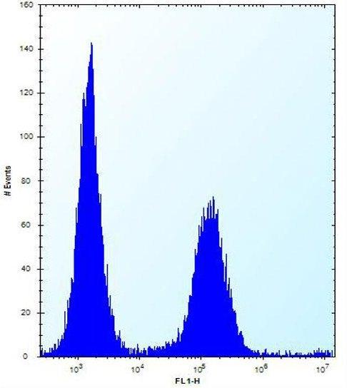 Flow Cytometry - Anti-ENOX2 antibody - N-terminal (ab171420)
