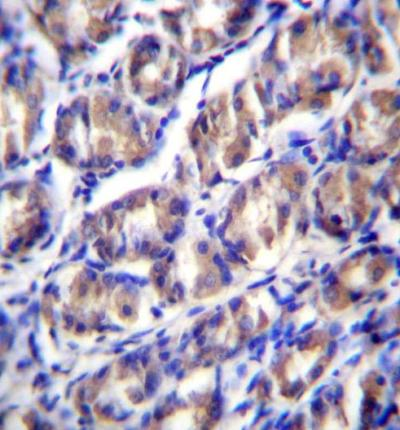 Immunohistochemistry (Formalin/PFA-fixed paraffin-embedded sections) - Anti-ODF2L antibody - C-terminal (ab171538)