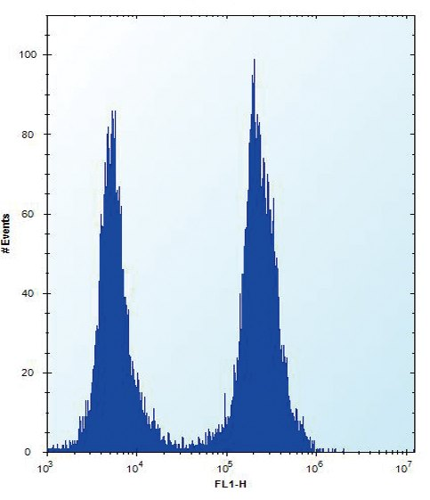 Flow Cytometry - Anti-SLC16A10 antibody - C-terminal (ab171649)
