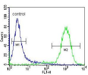 Flow Cytometry - Anti-NETO2 antibody - N-terminal (ab171651)