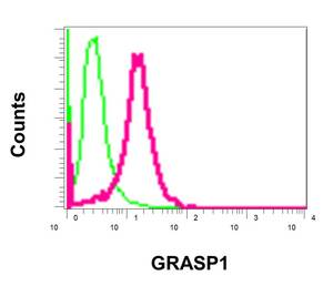 Flow Cytometry - Anti-GRASP1 [EPR11703] antibody (ab171940)