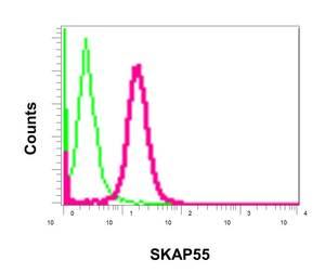 Flow Cytometry - Anti-SKAP55 antibody [EPR11359] (ab171947)