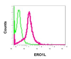 Flow Cytometry - Anti-ERO1L [EPR12475(B)] antibody (ab172954)