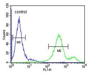 Flow Cytometry - Anti-EBPL antibody - C-terminal (ab175513)