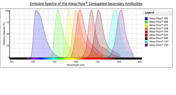 Alexa Fluor® - Goat Anti-Rat IgG H&L (Alexa Fluor® 680) (ab175778)