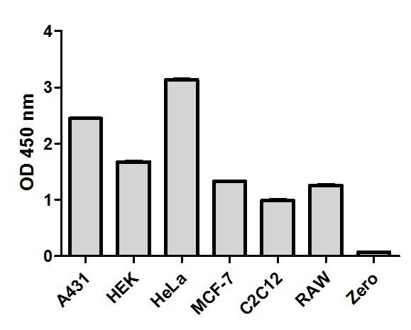 Comparison of Comparison of {target} expression in different cell lines expression in different cell lines