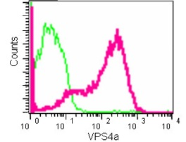 Flow Cytometry - Anti-VPS4a [EPR14545(B)] antibody (ab180581)
