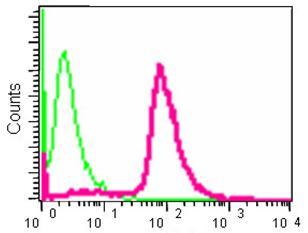 Flow Cytometry - Anti-gamma Tubulin [EPR13872] antibody (ab180595)