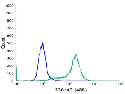 Flow Cytometry - Anti-C19orf2 [SP215] antibody (ab183310)