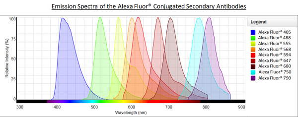 Alexa Fluor® - Anti-alpha smooth muscle Actin antibody [1A4] (Alexa Fluor® 488) (ab184675)