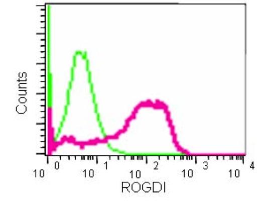 Flow Cytometry - Anti-ROGDI [EPR15190] antibody (ab184954)