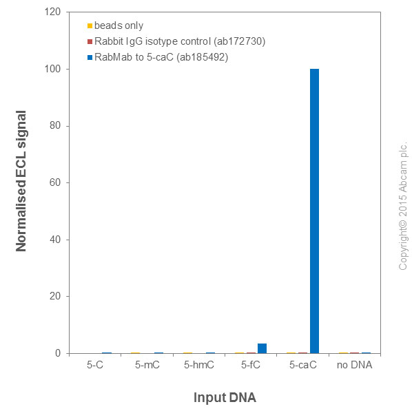MeDIP - Anti-5-carboxylcytosine (5-caC) antibody [RM24 1-A3] (ab185492)