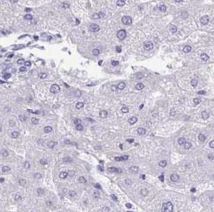Immunohistochemistry (Formalin/PFA-fixed paraffin-embedded sections) - Anti-TMCO5A antibody - N-terminal (ab188261)
