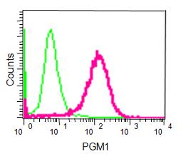 Flow Cytometry - Anti-PGM1 [EPR15240] antibody (ab188869)
