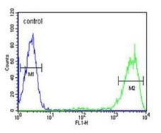 Flow Cytometry - Anti-Rab5 antibody - C-terminal (ab190215)