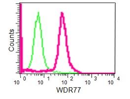 Flow Cytometry - Anti-WDR77 [EPR10709(2)] antibody (ab190361)