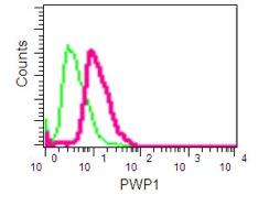 Flow Cytometry - Anti-PWP1 [EPR16131] antibody (ab190795)