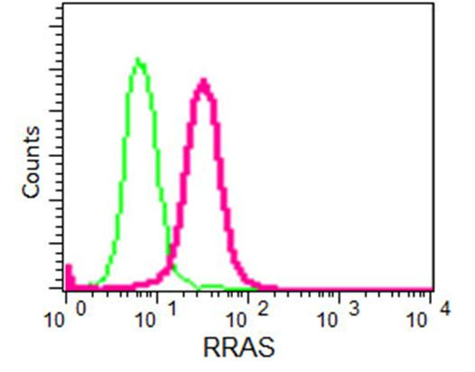 Flow Cytometry - Anti-RRAS [EPR15843] antibody (ab191399)