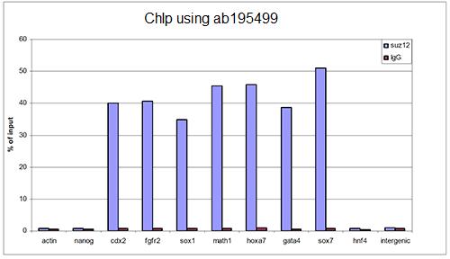 ChIP - Anti-SUZ12 antibody - N-terminal (ab195499)