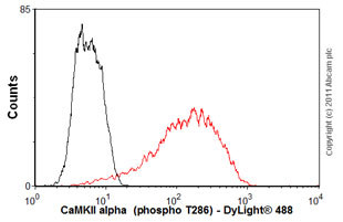 Flow Cytometry - Anti-CaMKII (phospho T286) antibody [22B1] (ab2724)