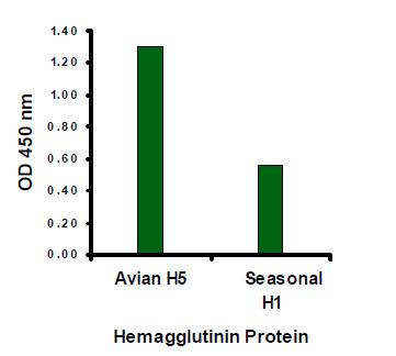 ELISA - Anti-Avian Influenza A Hemagglutinin antibody (ab21297)