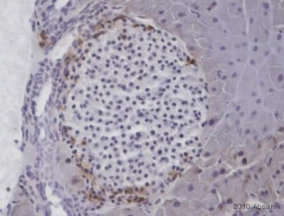 Immunohistochemistry (Frozen sections) - Anti-Somatostatin 28 antibody (ab22682)