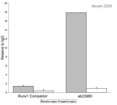 ChIP - Anti-RUNX1 / AML1 antibody - ChIP Grade (ab23980)