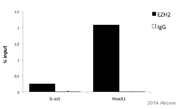 ChIP - Anti-KMT6 / EZH2 antibody - ChIP Grade (ab3748)
