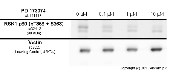 Western blot - Anti-STAT3 (phospho S727) antibody [E121-31] (ab32143)