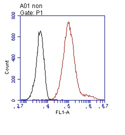 Flow Cytometry - Anti-Nucleophosmin antibody [5E3] (ab40696)