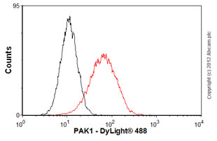 Flow Cytometry - Anti-PAK1 antibody [EP795Y] (ab40852)