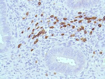 Immunohistochemistry (Formalin/PFA-fixed paraffin-embedded sections) - Anti-CD45RA antibody [SPM504], prediluted (ab52120)