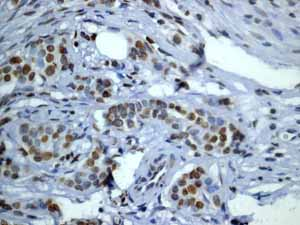 Immunohistochemistry (Formalin/PFA-fixed paraffin-embedded sections)-Anti-Histone H2B (acetyl K20) antibody [EP859Y] - ChIP Grade(ab52988)