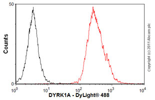 Flow Cytometry - Anti-DYRK1A antibody (ab54944)