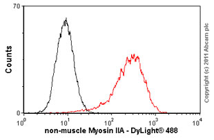 Flow Cytometry - non-muscle Myosin IIA antibody (ab55456)