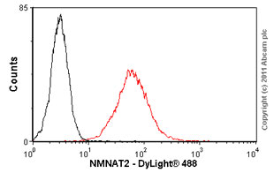 Flow Cytometry - NMNAT2 antibody (ab56980)